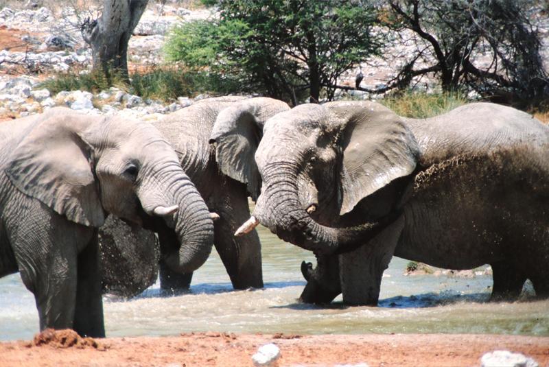 Elefantenherde am Fluss
